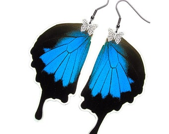 Real Butterfly Wing Earrings (Ulysses Hindwing - E001)
