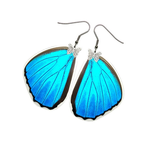 Real Butterfly Wing Earrings (Iridescent Blue Morpho Menelaus Hindwing - E168)