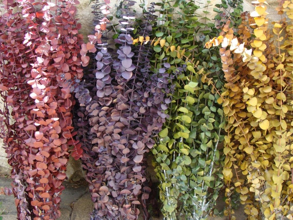 1/2 lb. Preserved Eucalyptus- Rustic Wedding- Dried Floral Arrangement- Primitive Wedding Wreath- Fall Decor- Fall Arrangement- Wall Decor
