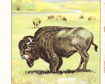 1926 Animal Print - Bison - Vintage Antique Natural History Home Decor Art Illustration for Framing