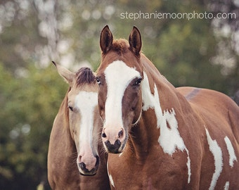 Horse Photography, Wild Horses, Wild Horse Photography, Fine Art Equine Photography,
