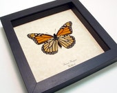 The Monarch Conservation Butterfly Real Framed Display 111v - REALBUTTERFLYGIFTS