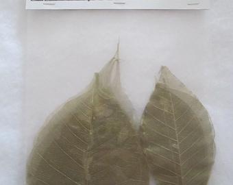 Skeleton Leaves - Gold