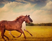 Equine Fine Art, Horse Photo, Horse Portrait, Horse Decor, Horse Photography, 8x12 Fine Art Print, Horse Running