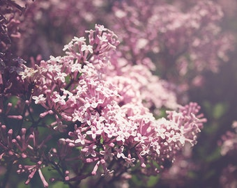 Lilacs Photography, Spring Nature Photograph, Flower Photography, Nature, Pastel Purple, Lavender Wall Art, Floral Decor, Cottage Chic Art