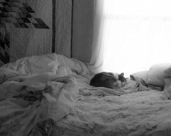 Sleep Sweet Fine Art photography Black and White rumpled bed napping cat window light cottage style county home peaceful afternoon innocent