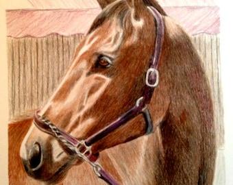 custom horse pet portrait in colored pencil