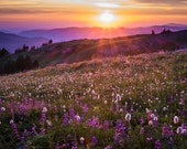 Flower Photography Landscape Photograph Sunset Photo Flower Print Wildflowers Sunrise Violet Purple Lilac nat101