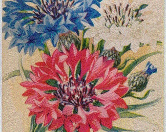 BACHELOR'S BUTTON! (Finest Double Mixed (Red)) Vintage Flower Seed Packet Tuckers Seed House Lithograph (Carthage, Missouri)