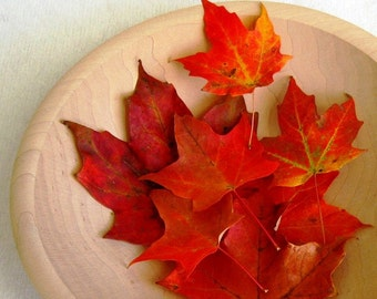12 Red Maple Leaves - Vibrant Autumn Hues, Dried Leaves, Fall Leaves, Autumn Weddings, Fall Decorations, Thanksgiving Table Decor