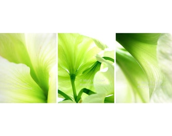 Abstract Green Amaryllis Flowers Photo Set of Three 3 prints 8x10 triptych lime green decor floral photography trio bright chartreuse white