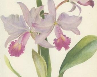 Vintage Botanical Print, Orchid, Cattleya, Pink Blossom, Indoor Plant, Flower Art, Country Cottage Decor, 1968/43,