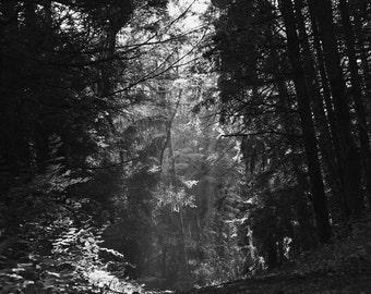 Deep woods photograph-Heavenly Path Black & White fine art print - New England photo, sun beam, mysterious path, lush woods, nature wall ar