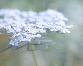 Queen Annes Lace photograph summer flower white light pale blue teal aqua green delicate garden country cottage chic 8x10 ethereal dreamy