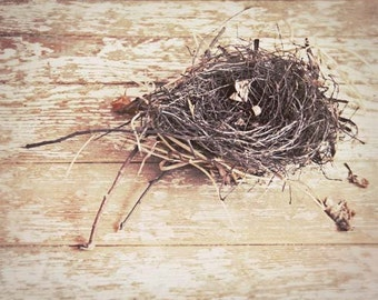 Bird's Nest Photograph - twigs brown sticks woodland nature natural cream sand 8x10 beige rustic home decor shabby chic decor