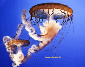 Graceful Jellyfish Photograph