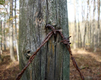 Fence post and barb wire, fine art photography, weathered wood, rusty barb wire, forest, fall, autumn, brown