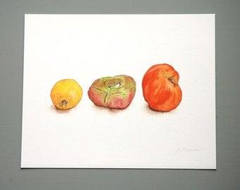 Heirloom Tomatoes - Print of Original Watercolor Illustration