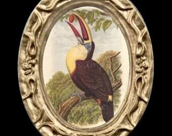 Toucan Bird Portrait Miniature Dollhouse Art Picture 6336