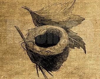 Instant Download - Bird's Nest Vintage Illustration - Download and Print Image Transfer Digital Sheet by Room29 Sheet no. 1079