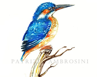 7x9 - Original Watercolour. Kingfisher.. NOT A PRINT ..Original Painting fish