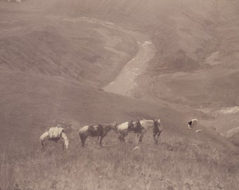 Time for a Little Rest - HORSES with SNAKE RIVER in Background Photo Idaho Circa 1900