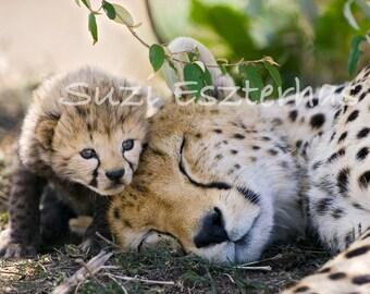 Baby Animal Photography, CHEETAH BABY With MOM Photo Print, Wildlife Photography, Wall Decor, Nursery Art, African Safari, Cheetah Cub, Cat