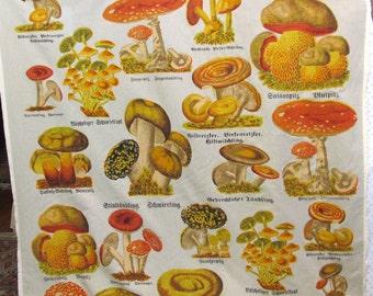 MUSHROOMS  screenprint fabric by Design Legacy