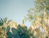 Botanical Photography, Nature Photograph, Film Photography, Green Cactus Print, Desert Photograph, Modern Decor, Blue, Mint, Seafom - Cactus