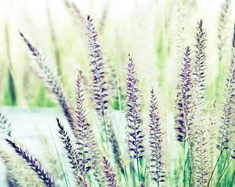 Floral Field Lavender Green Spring Home Decor Wall Art Fine Art Photography Print 5x7
