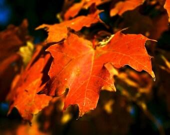 Nature Photography Autumn Fall Leaves Orange Home Decor Wall Art Fine Art Photography Print  8x10