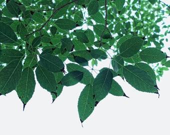 Nature photography   green leaves photography botanical  wall art  home  decor art  Fine Art Photography Print