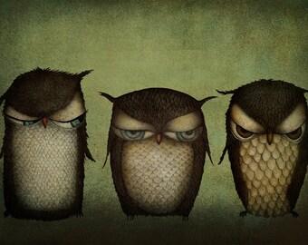 Three grumpy owls - Art print (3 different sizes)