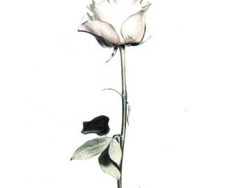 Fashion Illustration '12x16' - Rose Pink