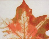 Maple Leaf in fall color on Japanese paper