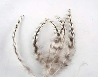 24 Cruelty free Neck and saddle  Feathers grizzly  2 to 6 inches CFBR5 organic