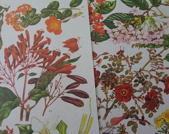 "DEEP Tones Organic, Pair of Large 9"" by 12"" Botanical Prints, EXTREME Detailed Graphics,  Deep Red Orange Greens, Hints Yellow Lavender"