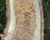 Gorgeous Highly Figured Live Edge Populus tremuloides - Sliced Wood Board - Quaking Aspen