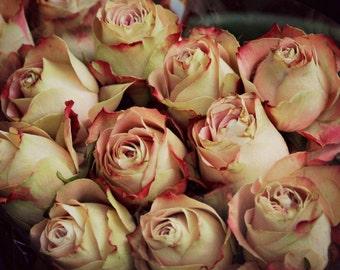 Antique Roses - Cross stitch pattern pdf format