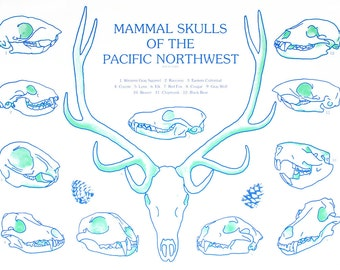 Mammal Skulls of The Pacific Northwest 18 x24 Screen Print