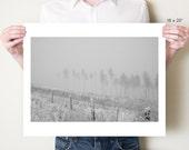 Forest photography, winter landscape photograph. Bleak Northumberland artwork, England monochrome fine art photo. Small / large format print