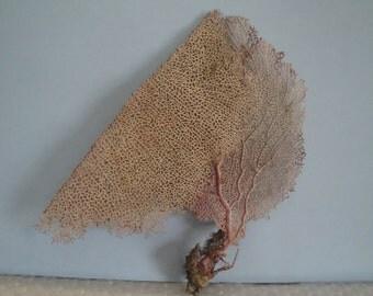 """10.2""""x 10"""" Pink Sea Fan Fish Tank Seashells Reef Coral"""