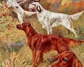 Irish Setter and English Setter Dog Print, Edward Herbert Miner, Hunting Dog, 1930s Vintage