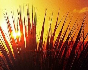 Beach Grass Sunrise, Nature Photography, Fine Art Print, Orange Sky, Grasses, Plants, Nature Wall Art, Home Decor