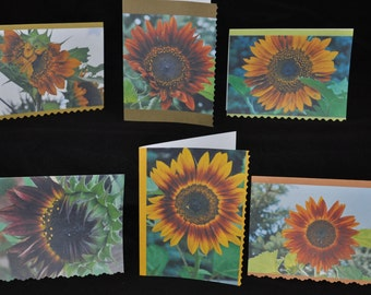 NEW!!! Sunflowers Blank Card Set