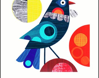 New Zealand Tui, bird,  print