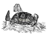 Turtle with Morels Note Card, Pack of 6, Turtle and Mushrooms, Allan Sutley Artist, Pen and Ink, Reproduction from original