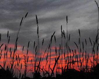 8x10 grasses against sunset sky