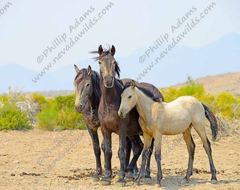 """Mustang Mare, Colt, & Foal - 8.5"""" x 11"""""""