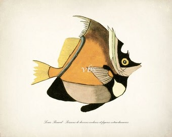 Fanciful Fish Coastal Decor Nautical Art Print No. 10 10 x 8